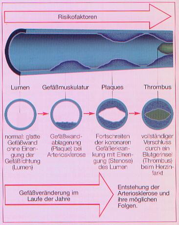 labors die den homocysteinspiegel untersuchen